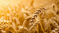 What is Grain? What are the benefits?