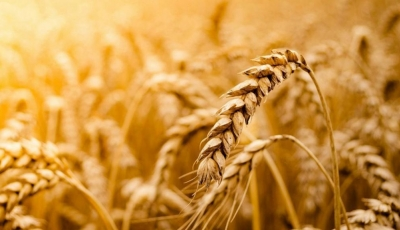 Что такое зерно? Каковы преимущества?